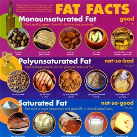 carbohydrates normally function in animals as and bad fats the facts wellness and chiripractic