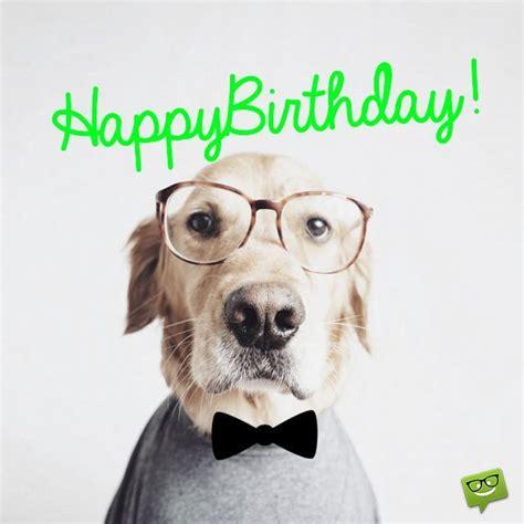 Happy Birthday Wishes Dogs 41 Best Funny Birthday Wishes For Birthday Boy Girl Aunt
