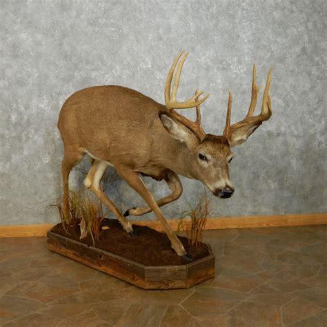 Whitetail Deer Home Decor whitetail deer home decor best free home design idea