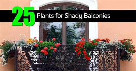 plants  shady balconies