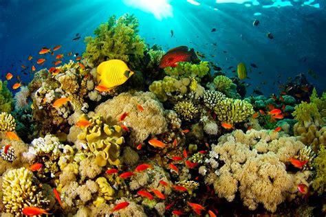 wallpaper bergerak laut 7 destinasi wisata di indonesia yang terancam rusak ayo