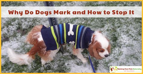 how to stop a from marking marking in house archives raising your pets naturally with tonya wilhelm