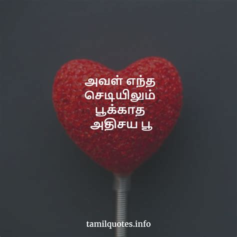 tamil best love lines love quotes in tamil best