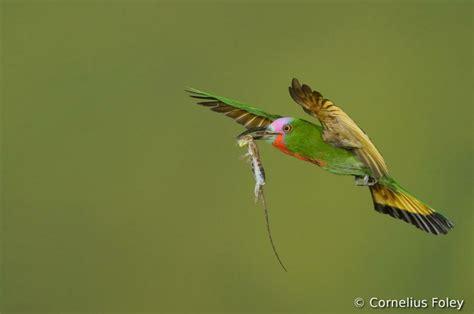 imagenes de karma bird fly fotografias do concurso mundial de fotos de p 225 ssaros 2012