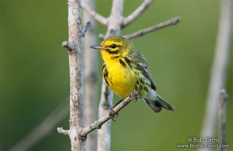 types of birds in missouri pictures to pin on pinterest