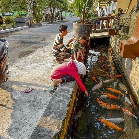Lu Hias Di Yogyakarta dulu menjijikan selokan di jogja ini kini jernih dan