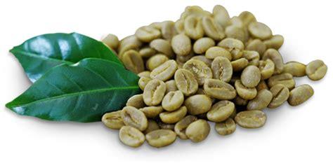 Green Coffee Bean Arabica Kopi Hijau Biji Arabica Diet green coffee 100 extract today s top choice for a