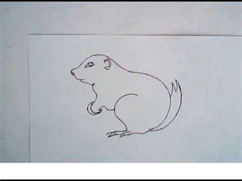 How To Draw A Ground Squirrel