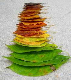 how do leaves change color what makes leaves change color in the fall mannaismaya