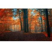 Landscape Nature Fall Path Forest Crossroads Leaves