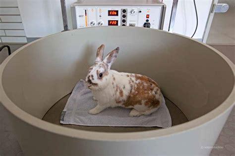wann sind kaninchen ausgewachsen harnsteine urolithiasis beim kaninchen definition