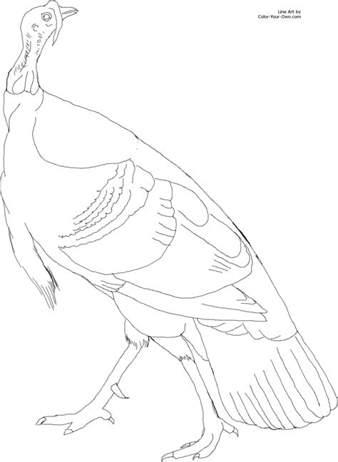coloring pages of wild turkeys american wild turkey coloring page