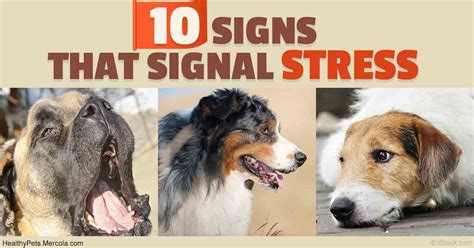 signs of stress in dogs 10 signs your may be stressed