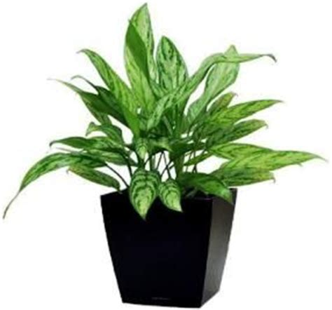 images  office plants  pinterest office