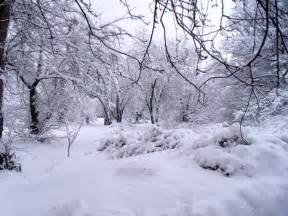 Fuerte nieve