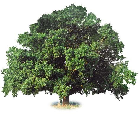 type of trees dk find out fun facts for kids on animals earth