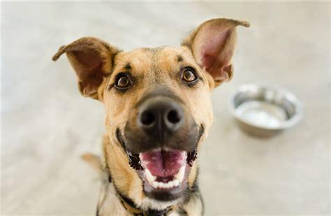dogs  speak human heres  tech   change