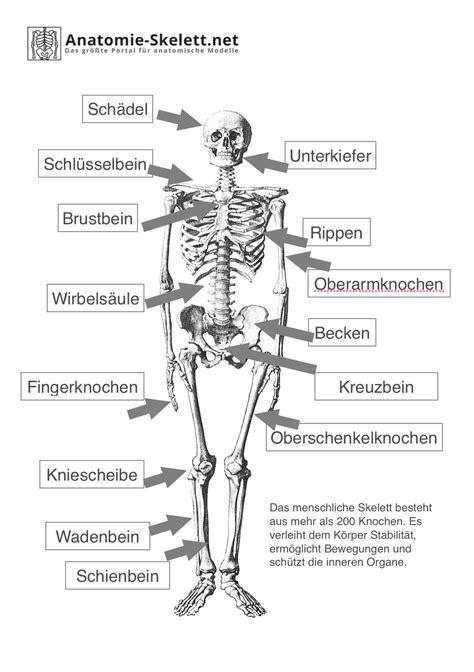 Beschriftung Skelett by Das Menschliche Skelett Beschriftet Lehrmaterial