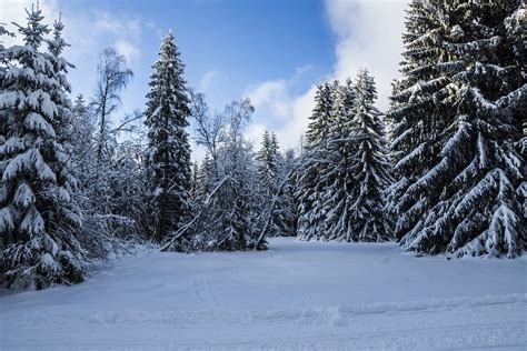 winter images free photo winter thuringia germany forest free image