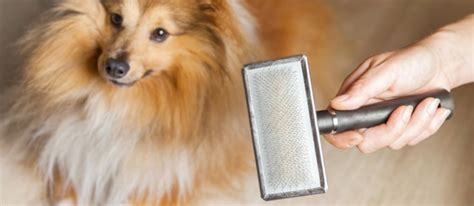 how to reduce dog hair in house how to reduce effects of pet dander in ac system and home