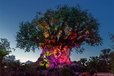 Tree Of Life by The Tree Of Life