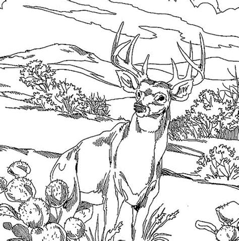 deer family coloring pages printable deer pictures quality pictures on animal
