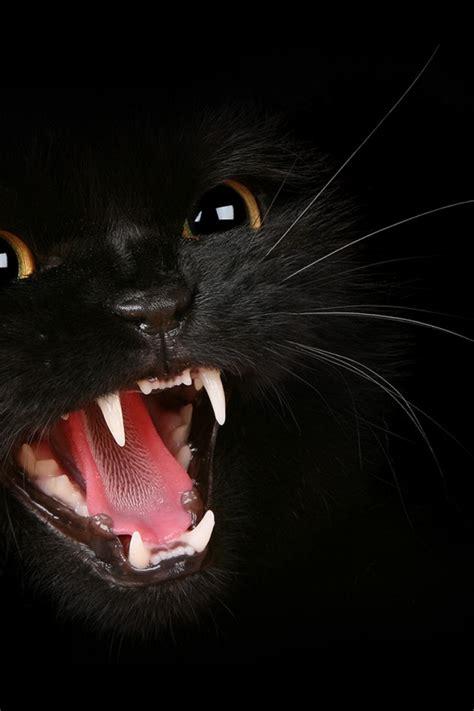 black cat wallpaper iphone 640x960 black cat iphone 4 wallpaper