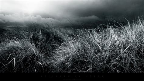 wallpaper black nature abstract black and white nature fields hd wallpapers