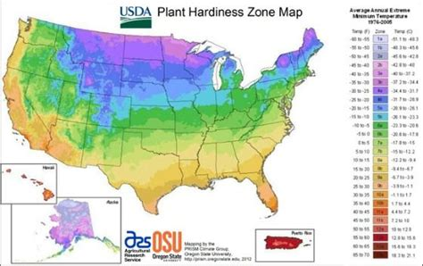 what planting zone am i in green thumb - What Zone Am I In For Gardening