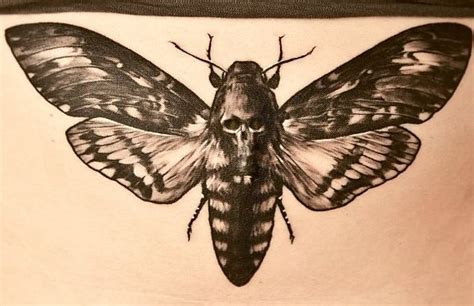 death head moth tattoo deaths moth pictures to pin on tattooskid