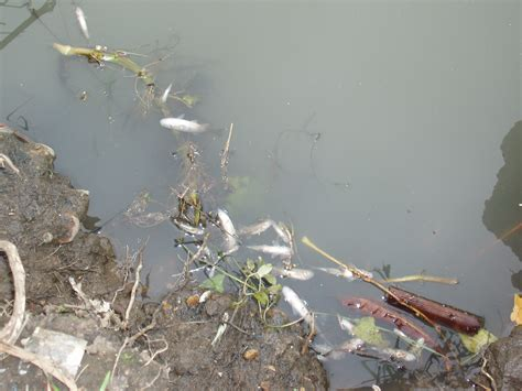 thames river sewage river crane devastated by raw sewage thames anglers