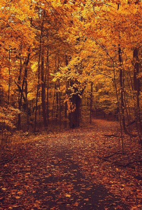 wallpaper tumblr autumn autumn forest hd wallpaper tumblr
