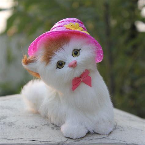 wallpaper whatsapp cats cute cat pics for whatsapp dp impremedia net