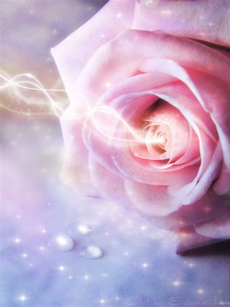 enchanted roses enchanted rose by susaleena on deviantart