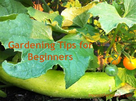 garden tips gardening tips for beginners it forward