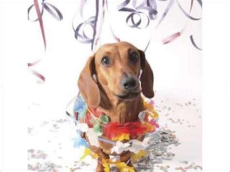 imagenes graciosas de cumpleaños de perros feliz cumplea 241 os perro de fiesta youtube