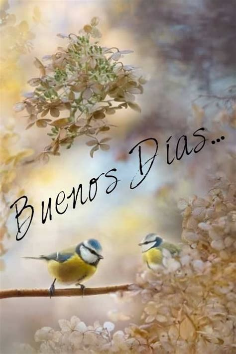 imagenes de mujeres good morning 321 best images about buenos dias on pinterest
