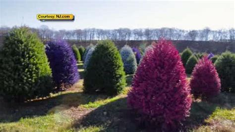 new jersey tree farm creates colored trees abc7ny