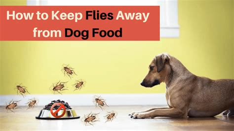 how to keep flies dogs how to keep flies away from food top solution