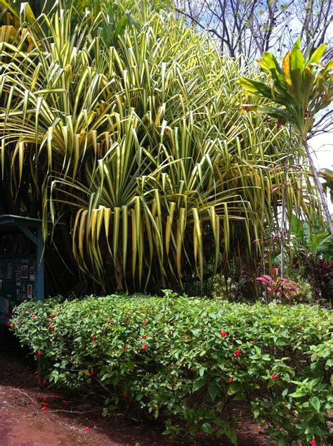 Hilo Botanical Garden Botanical Garden Big Island Hawaii Home Away From Home Pintere