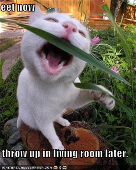 1pack Tanaman Rumput Kucing Cat Grass kenapa kucing memakan rumput kucing my