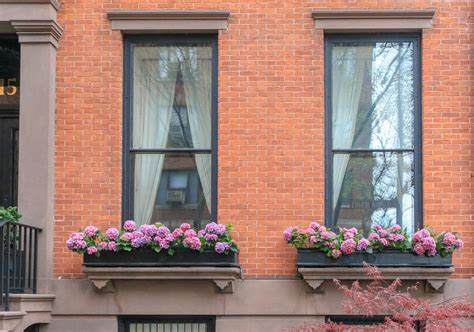 tips  beautiful window boxes  year  brownstoner