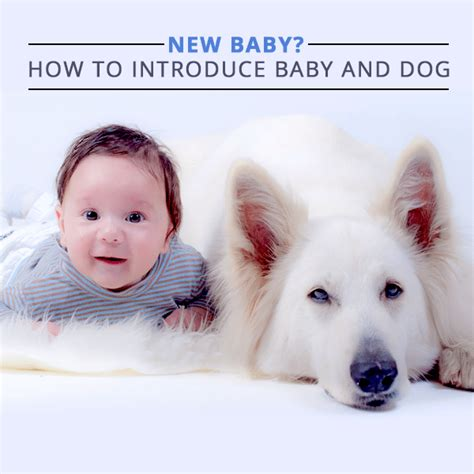 how to introduce a new puppy to a cat how to introduce your to a new baby