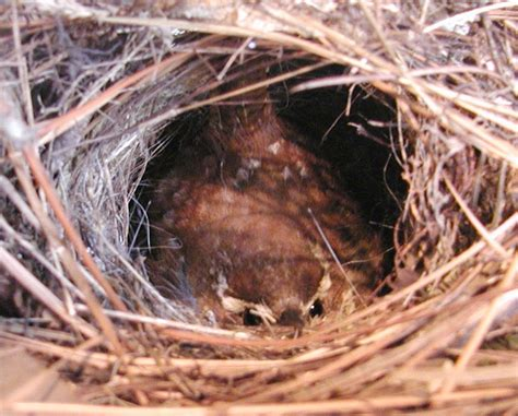 wren nest related keywords wren nest long tail keywords