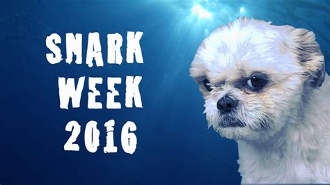 Check Out The Snark From Last by Snark Week Locoeco
