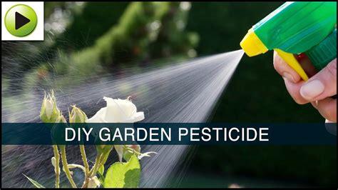 homemade garden pesticide youtube