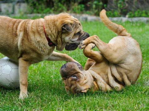 socializing dogs 7 tips for socializing your with others canna pet