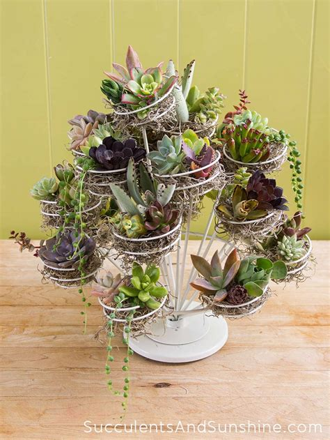 learn how to make a succulent stand using a cupcake display
