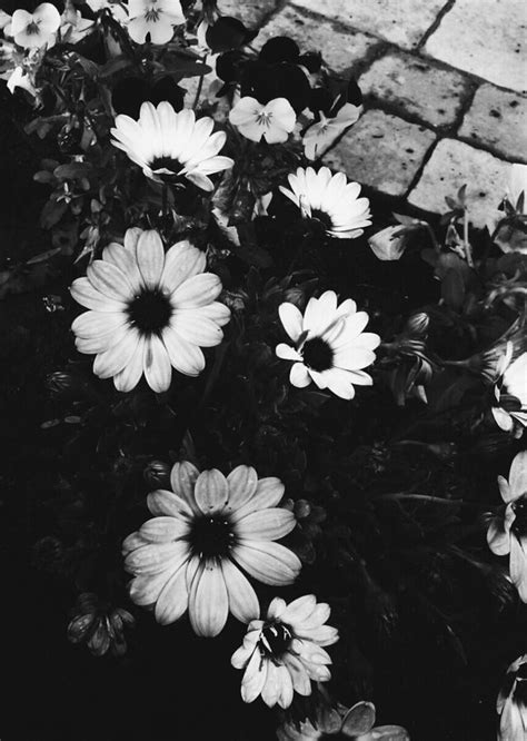imagenes tumblr black and white imagenes tumblr flowers