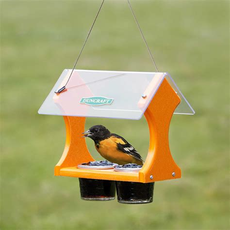oriole grape jelly bird feeder birdcage design ideas